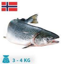 سمك سالمون نرويجى الحبه من3-4