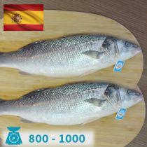 سمك سيباس اسبانى 800-1000