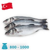 سمك سيباس تركي 800-1000