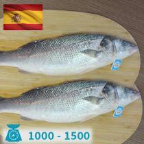 سمك سيباس اسبانى 1000-1500