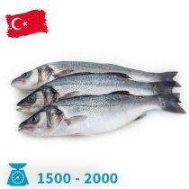 سمك سيباس تركى 1500-2000