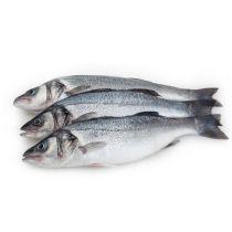 سمك سيباس تركى 600-800