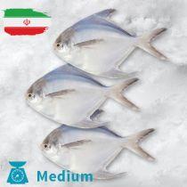 سمك زبيدى ايرانى وسط