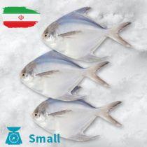 سمك زبيدى ايرانى صغير